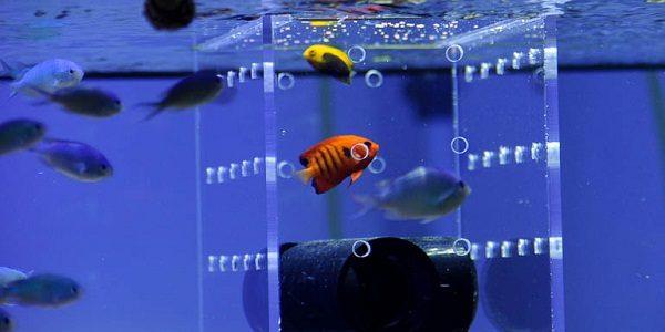 Acclimating Fish