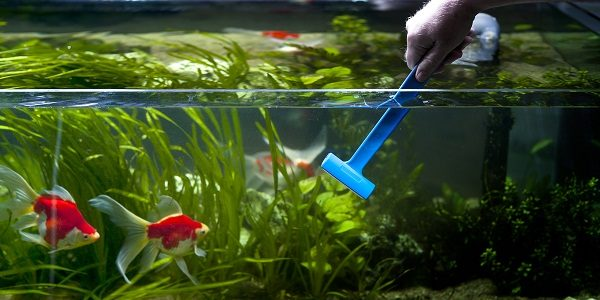 Tips to clean your tank without disturbing your fishes for How to keep fish tank clean without changing water