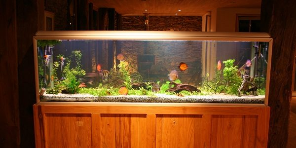 Benefits of a large fish tank the aquarium guide for Large fish tank