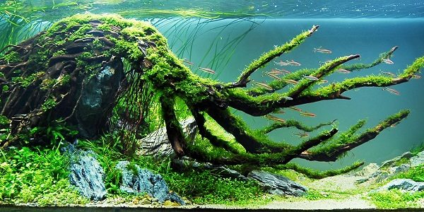 Biotope Aquascaping Style