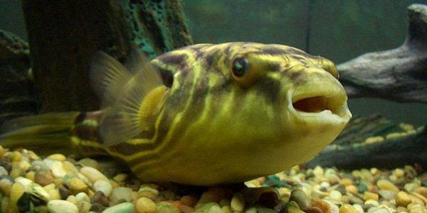 Brackish Water Fish