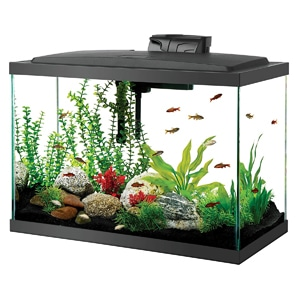 20 gallon aquarium - Aqueon Aquarium Fish Tank Starter Kits with LED Lighting