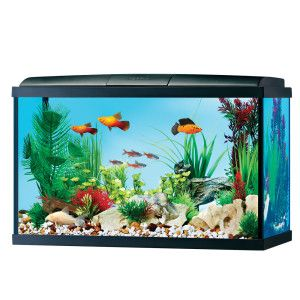 Best aquarium guide choosing the best tank the aquarium for 55 gallon fish tank starter kit