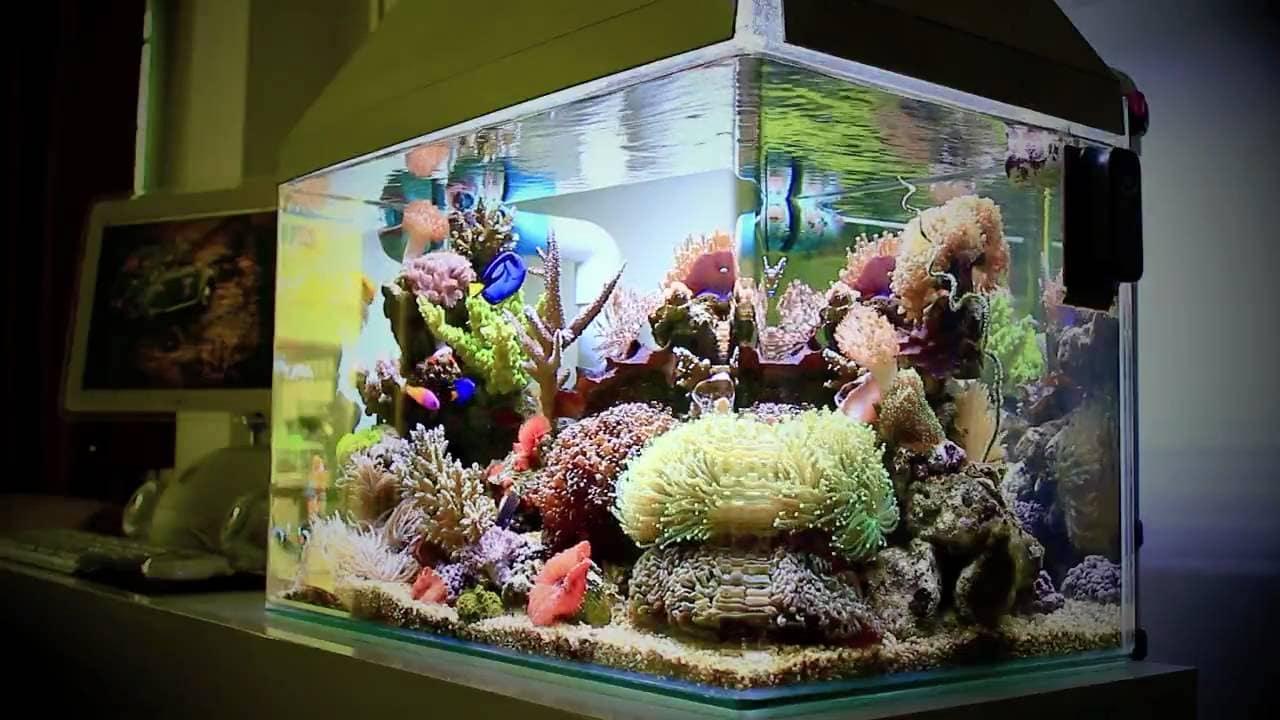 25 Gallon Fish Tank Setup Guide The Aquarium Guide