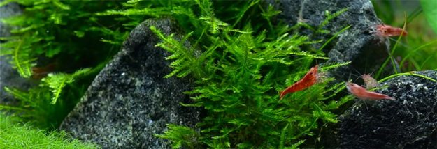 Shrimp Tank