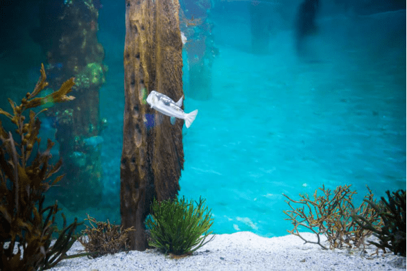 Fish swimming in a tank with some water plants