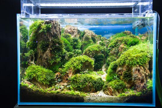 Chong coral growth in fish
