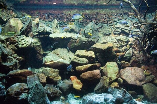 Aquarium Artis