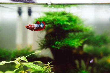 Best Tank for Betta Fish Buyer's Guide