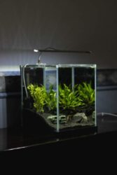 Fish tank on a table