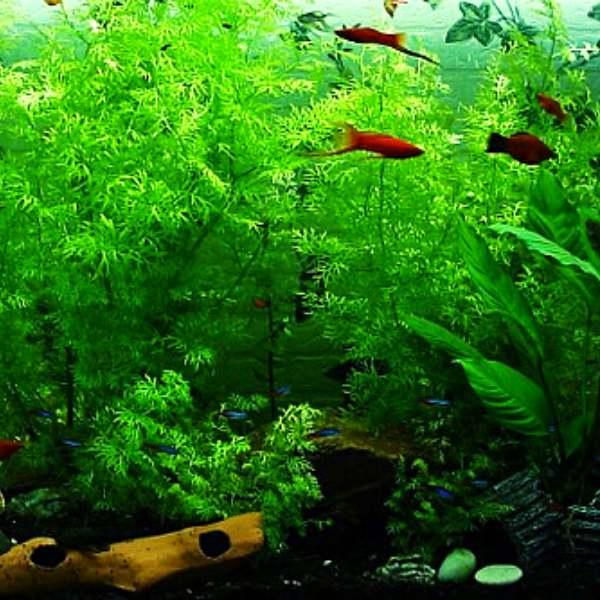 Planted tank using one of the best aquarium sand